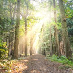 sol gennem træer