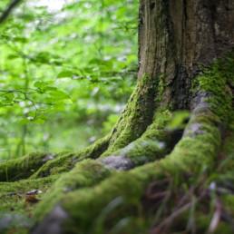 træer og mos